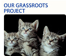 grass roots projects button